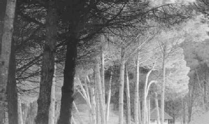 Grises del bosque - Liliana Muente